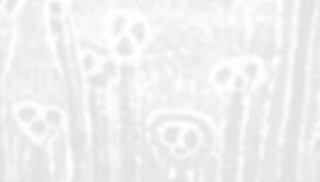 aboriginal header2