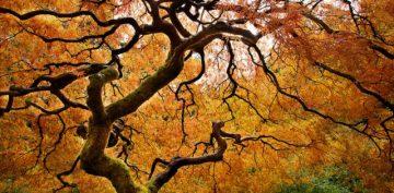 LItHubfall-tree